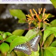5 Butterfly Themed Educational Activities for Kids