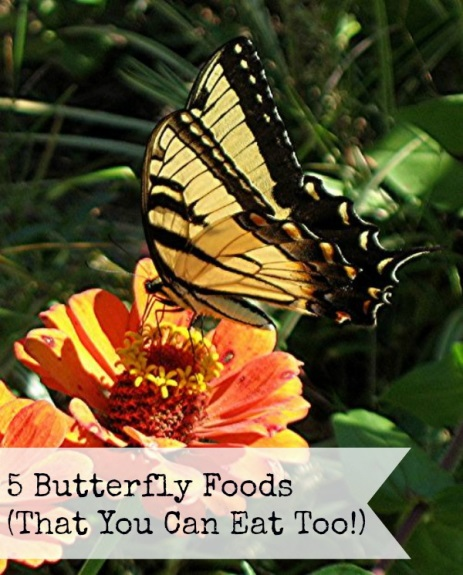 5 Foods Butterflies Can Eat (That You Can Enjoy Too!)