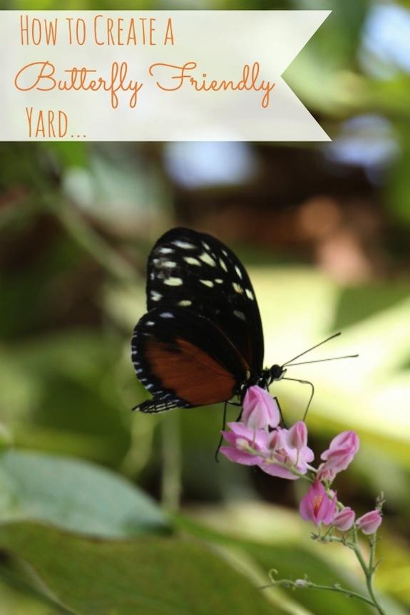 create butterfly friendly yard