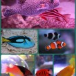 Sea Life Fish Collage