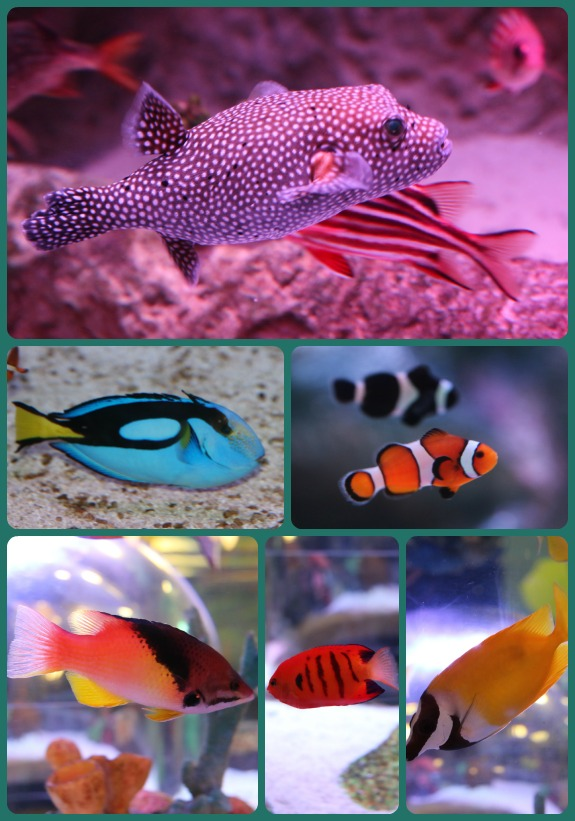 Sea Life Fish Collage