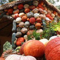 pumpkin hut