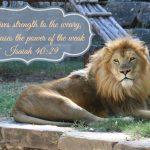 Isaiah 4029