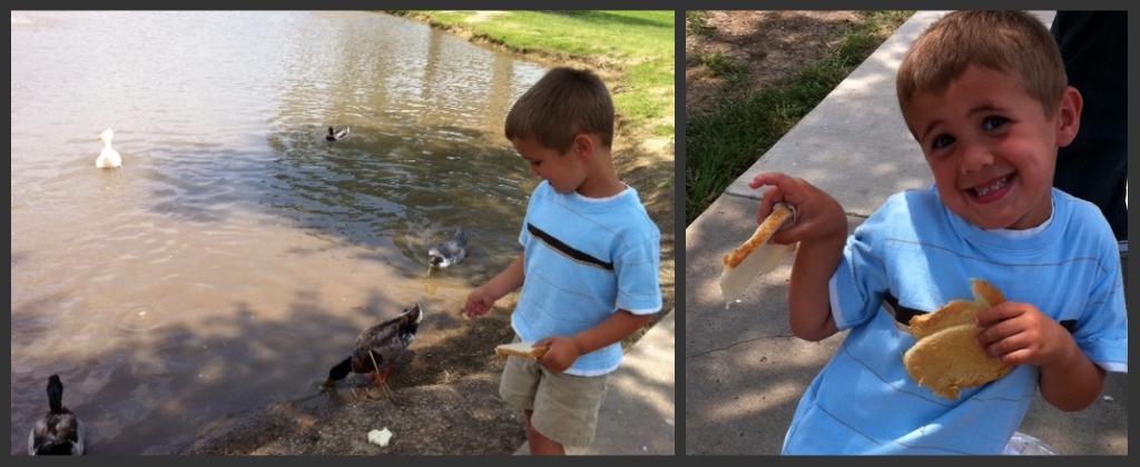 Let's Play, Playground, Feeding Ducks