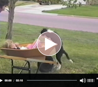A kid, her dog and a wheel barrel – what else do you need?