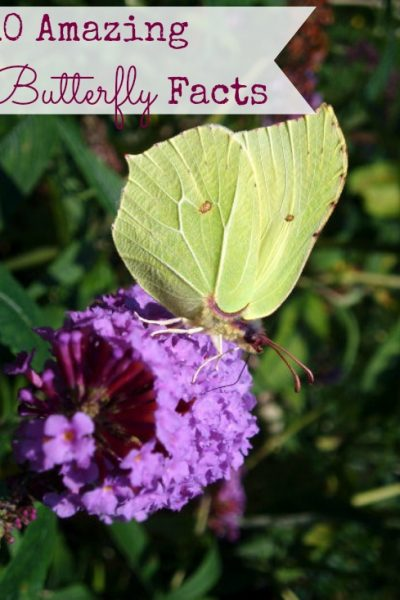 10 Fun & Amazing Facts About Butterflies