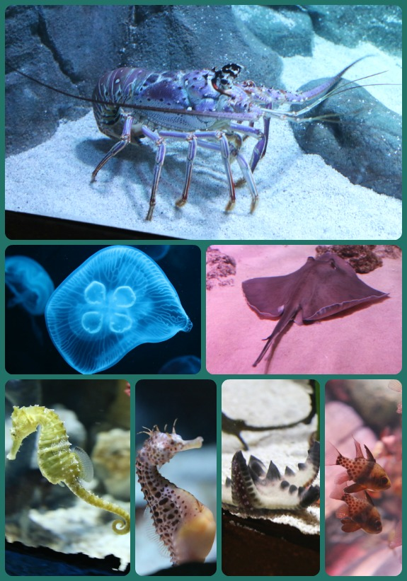 Sea Life Collage 2