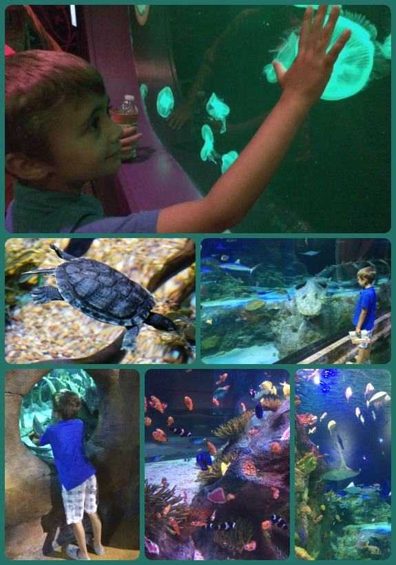Sea Life Collage 3