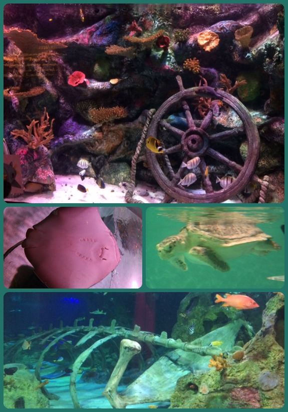 Sea Life Collage 4
