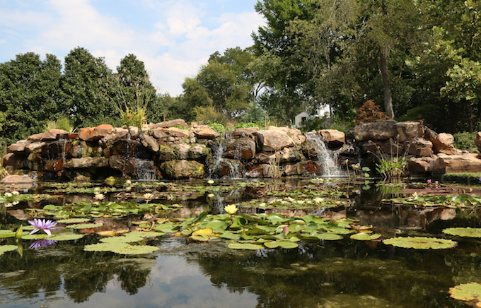 Pond at Dallas Arboretum