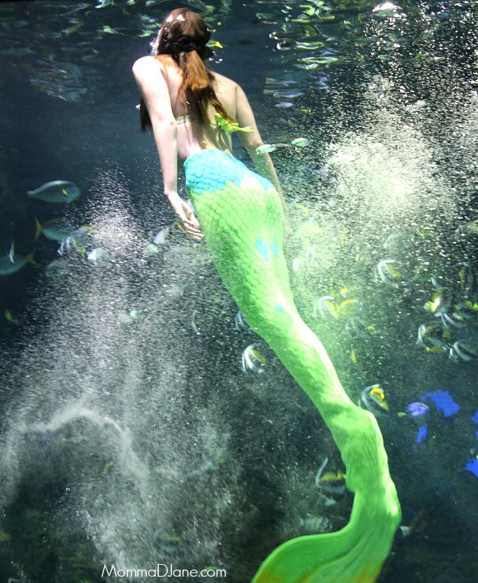 mermaid DSLR 2