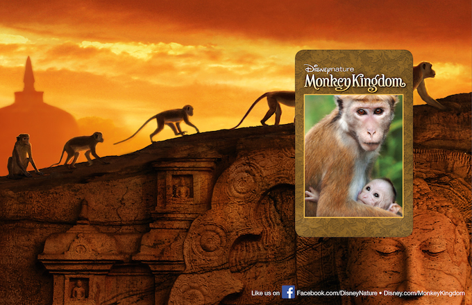 Monkey_Kingdom_persenter_Inside