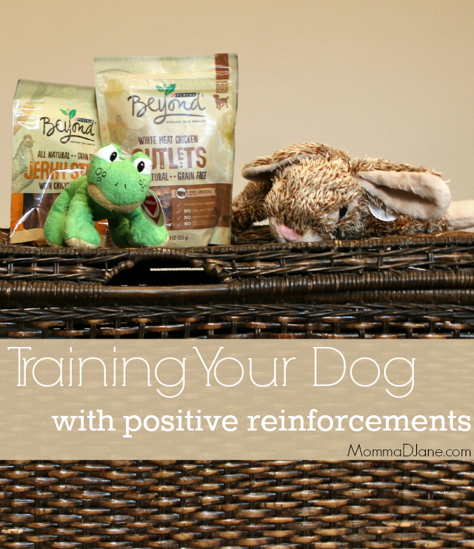Training Your Dog with Positive Reinforcements
