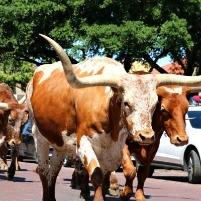 25 Things to Do in Fort Worth, Texas