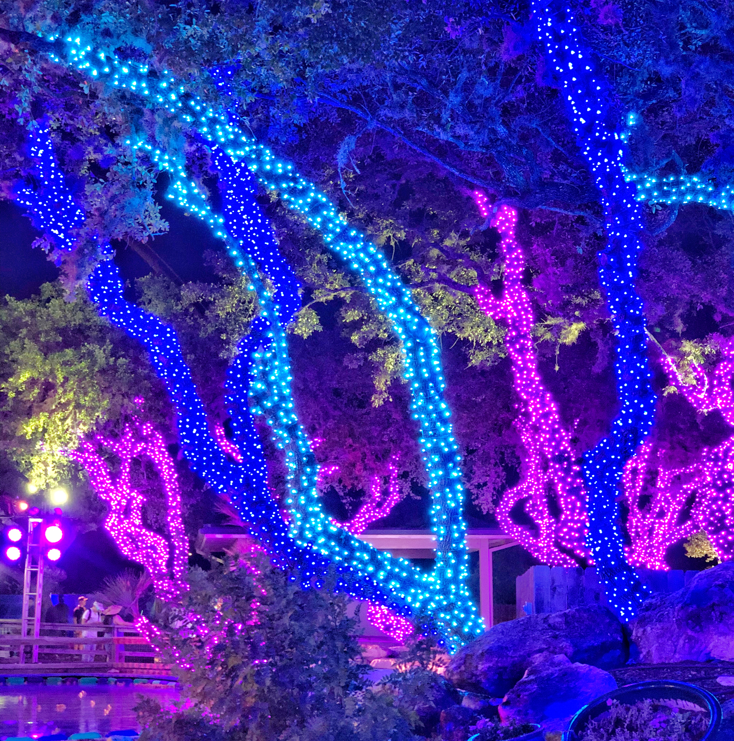 Neon Lights on Trees at SeaWorld