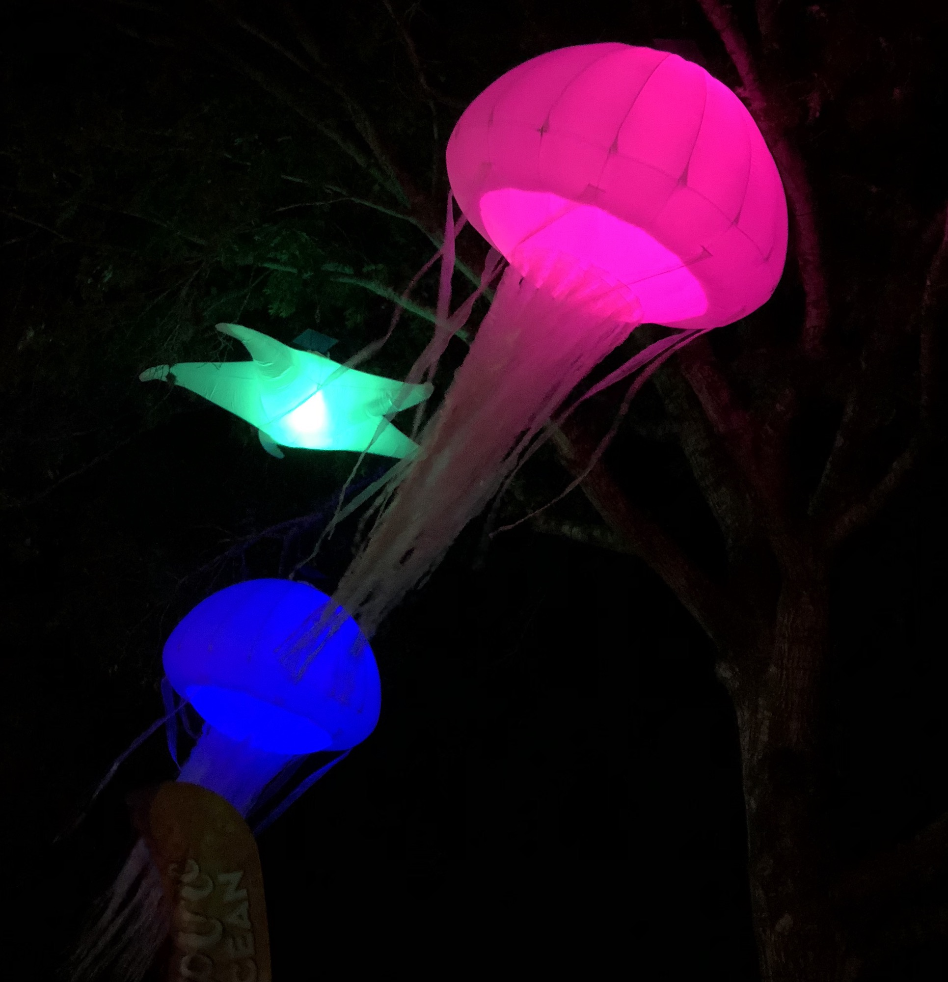 glowing sea decor on trees
