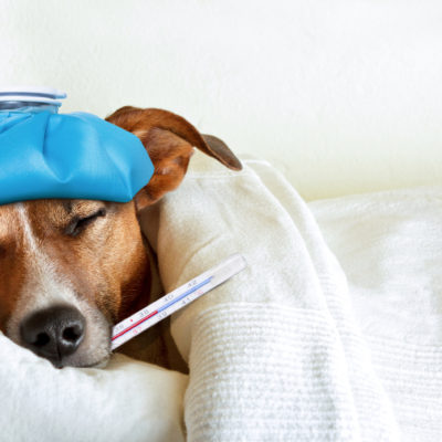 8 Health Concerns Which Can Affect Your Dog